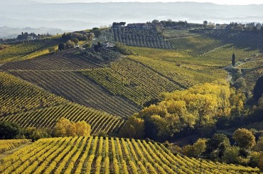 Vineyards and rolling hills in Tuscany