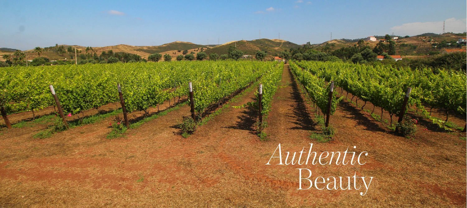 Authentic Beauty - organic vineyard in Silves Algarve